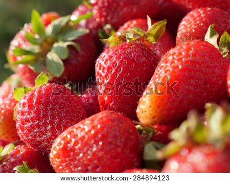 Shallow DOF background made of many organic red fresh strawberries  - Shallow DOF strawberry food and fruit natural background - stock photo