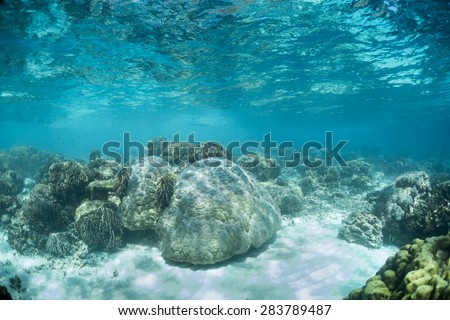 Shallow reef in the Andaman Sea. - stock photo