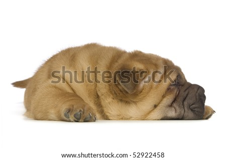 shar-pei puppy laid down isolated on white background - stock photo