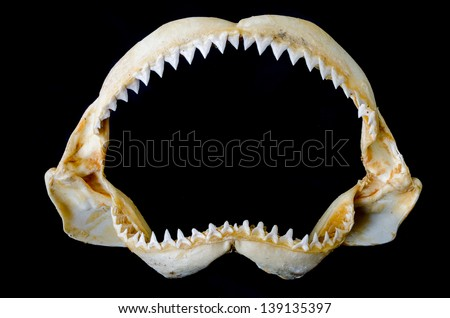 Sharp Teeth Drawing Sharp Shark Teeth Isolated