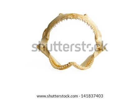 Shark jaw isolated on a white background - stock photo