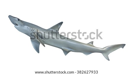 Shark on white background, isolated - stock photo