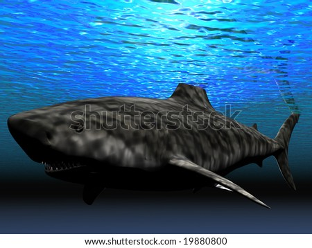 shark under water - stock photo