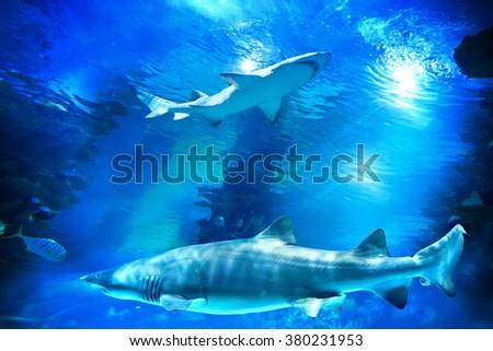 Sharks and small fish swimming in aquarium - deep blue shades - stock photo