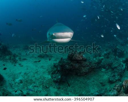 Sharks of Beqa Lagoon Fiji - stock photo