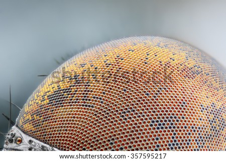 Sharp and detailed dried dead fly compound eye surface at extreme magnification taken with microscope objective  - stock photo