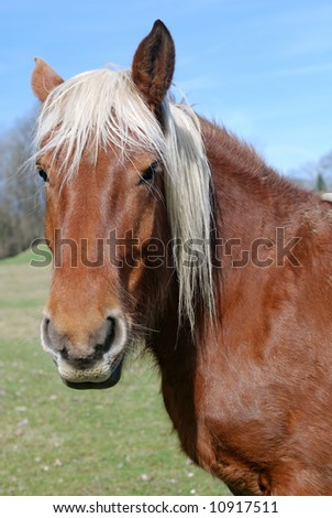Sharp focus on the eyes.of a field horse - stock photo