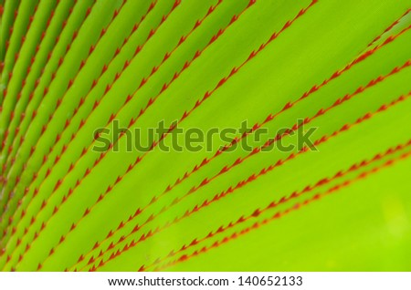 Sharp spiny red edges on bright green aloe leave - stock photo