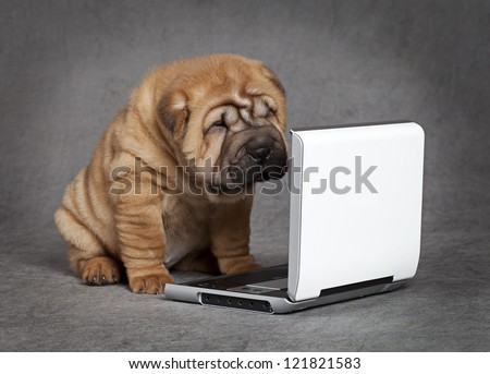 SharPei puppy dog watching DVD player with attention - stock photo