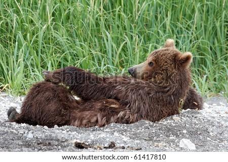 She-bear - stock photo