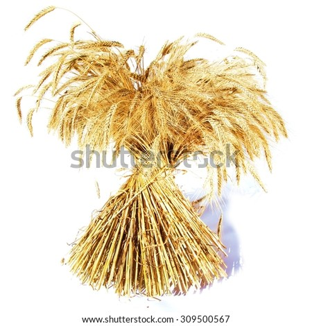 Sheaf of corn / cereal plant / white background - stock photo