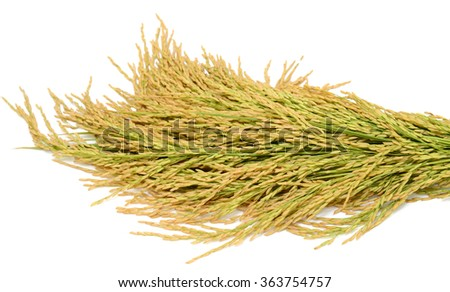 sheaf yellow rice isolated on white background - stock photo
