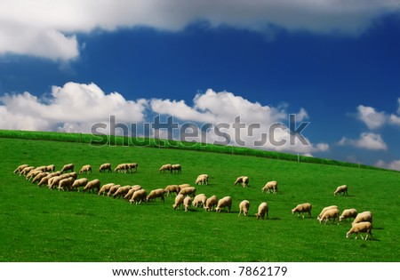 Sheep and green grass - stock photo