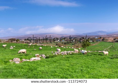 Sheep and rams in mountains - Ireland - stock photo