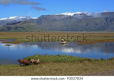 Sheep at a lake near Höfn, Iceland - stock photo