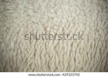 Sheep fur texture background.  - stock photo