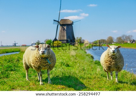 Sheep grazing near a dyke in the Netherlands on a sunny spring day - stock photo