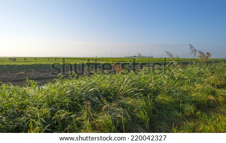 Sheep in a rural landscape at sunrise - stock photo