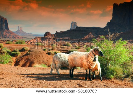 Sheep in Monument Valley at sunset - stock photo