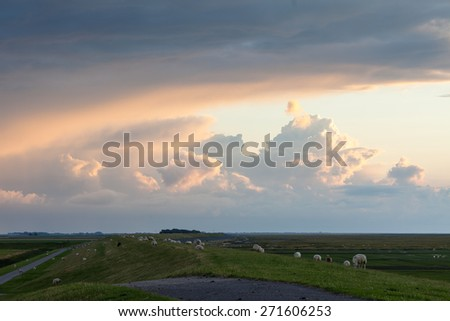 Sheep on a dutch dike during sunset - stock photo