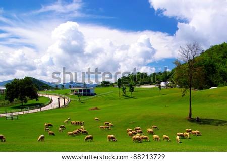 sheep on pasture - stock photo