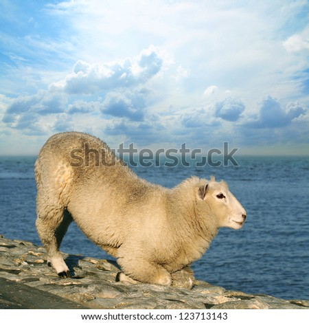 Sheep on seawall look to the ocean - stock photo