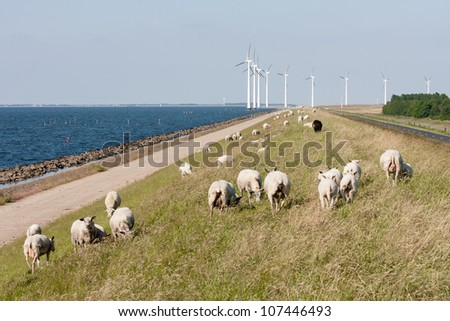 Sheep, sea and windturbines in the Netherlands - stock photo