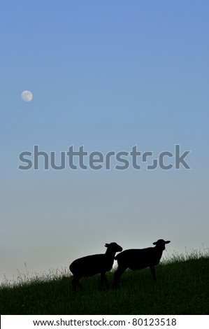 Sheep silhouette under full moon, family farm, Webster County, West Virginia, USA - stock photo