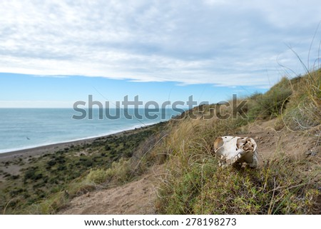 sheep skull and bones on the ground in Patagonia, Argentina - stock photo