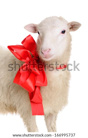 Sheep with Christmas bow. animal isolated on white background - stock photo