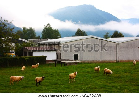 Sheeps grazing in the Alps in slovenia on the green meadow - stock photo