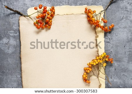 Sheets of vintage paper and rowan berry twigs, copy space - stock photo