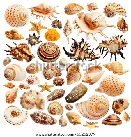 shell - stock photo