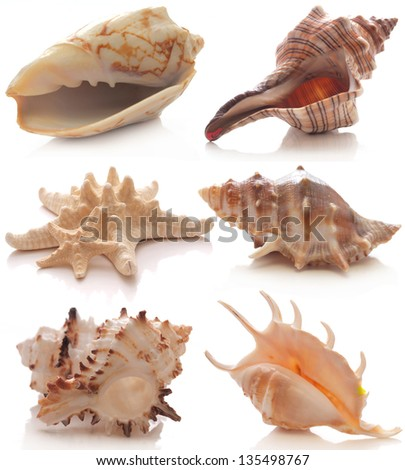 Shell collection - stock photo