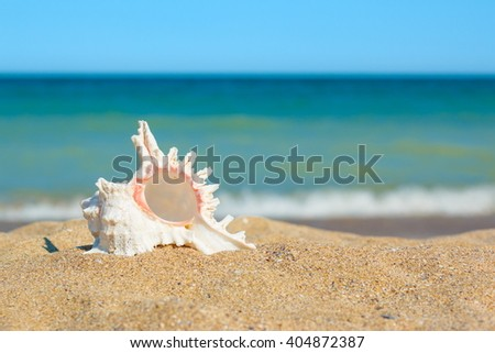 Shell in yellow sand on the sea side - stock photo
