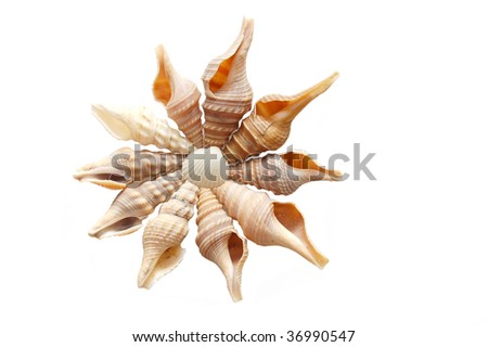 Shell isolated on the white background - stock photo