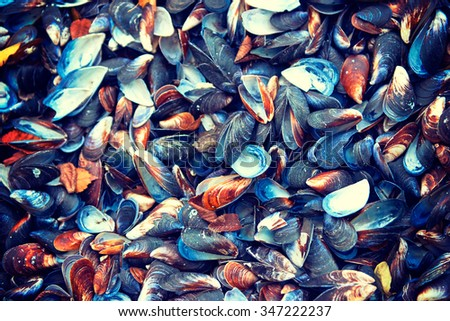 Shell mussel natural background - stock photo