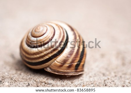 Shell of a snail - stock photo