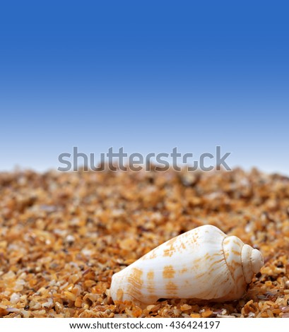 Shell of cone snail on sand and blue background with copyspace - stock photo