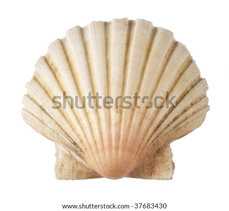 shell of the sea - stock photo