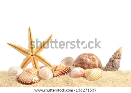 Shell on sand - stock photo