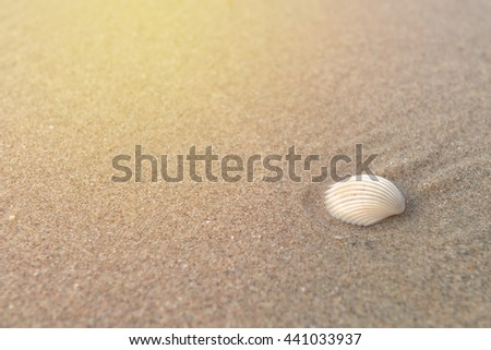 Shell on sand at beach in the morning. - stock photo