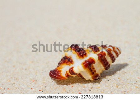 shell on sand beach - stock photo