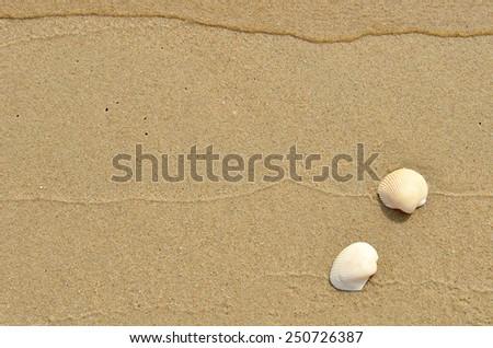 shell on seashore - stock photo