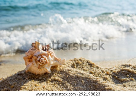 Shell on the beach and waves in a background - stock photo