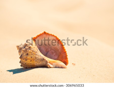 Shell on the beach closeup. Seashell on sandy beach in summer, soft light background. - stock photo