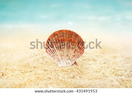 Shell on the sand beach summer background - stock photo