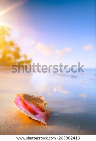 Shell on the tropical beach  - stock photo