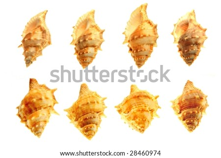 shell  on the white background - stock photo