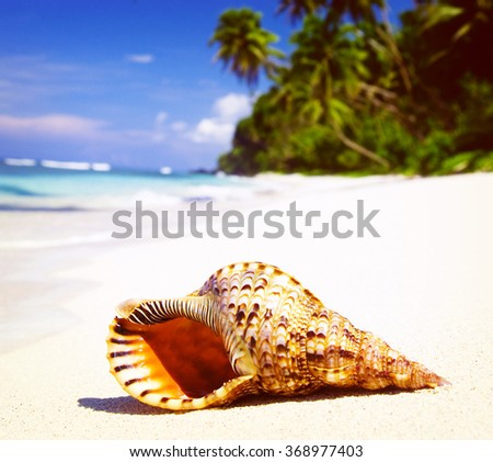 Shell on Tropical Beach Tranquil Scene Concept - stock photo